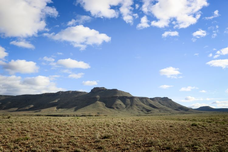 The vegetation on the parched plains of the Karoo National Park has been withering under the relentless sun. Picture: Aletta Harrison/News24