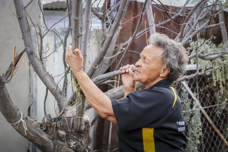 Joan Jacobs with one of the large trees in her garden that died due to the drought. Picture: Aletta Harrison/News24